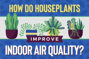 How do houseplants improve indoor air quality